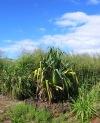 Palms & Plants (2)