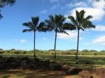 Palms & Plants (6)