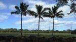 Palms & Plants (7)
