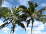 Palms & Plants (8)
